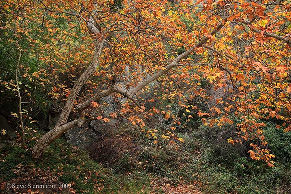 Santa Monica Mountains Fall Color