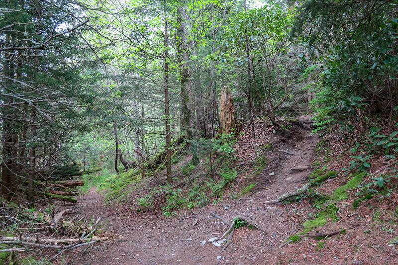 Mountains-to-Sea/Buckeye Gap Trail Junction -- 5,500'