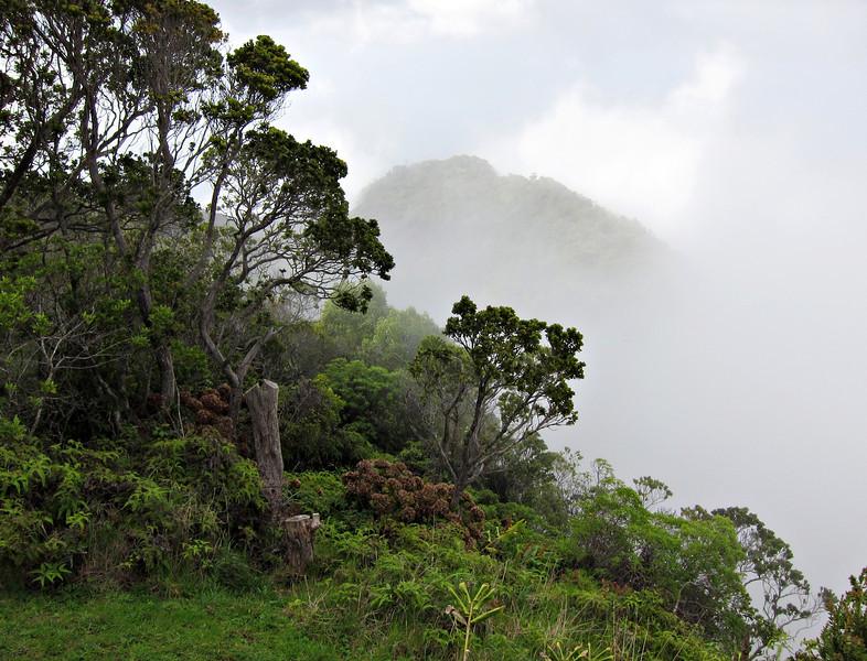 Kauai'10_S90_155.jpg