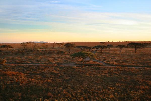 Serengeti 2007