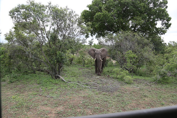 Elephant spotted at the Kruger National Park