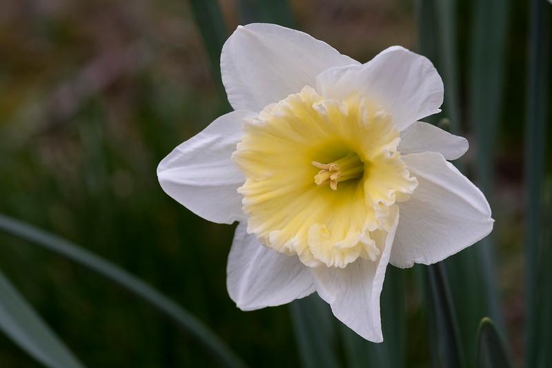 Flowers031220-380.jpg