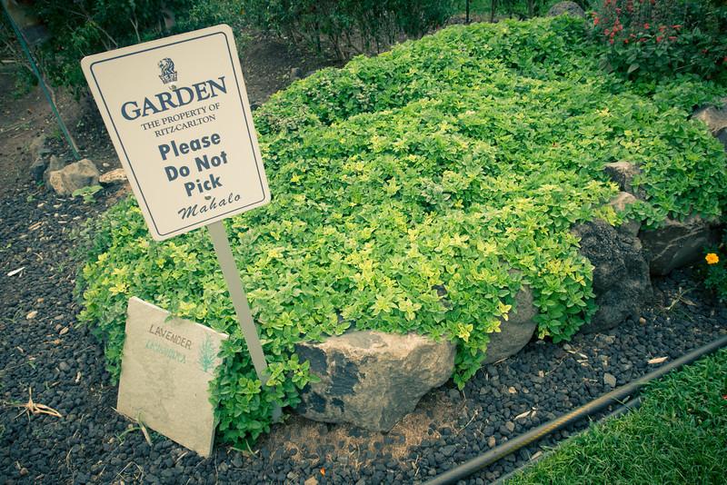 ritz carleton garden do not pick.jpg