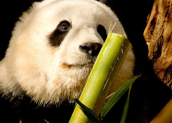 San Diego Zoo23