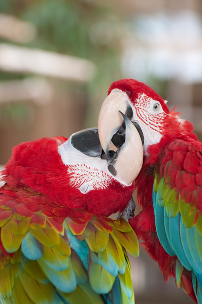 Macaws and Friends