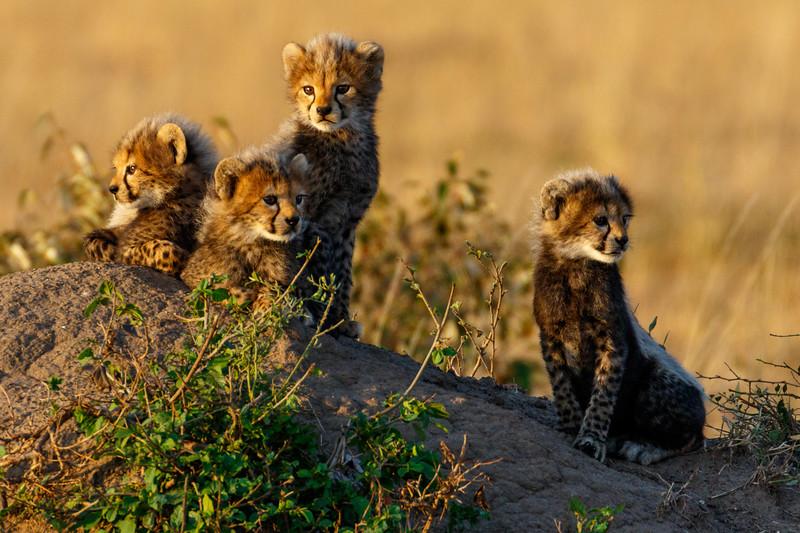 Kenya 2015-06223.jpg