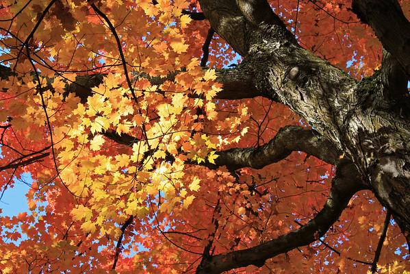 Trees of Portland