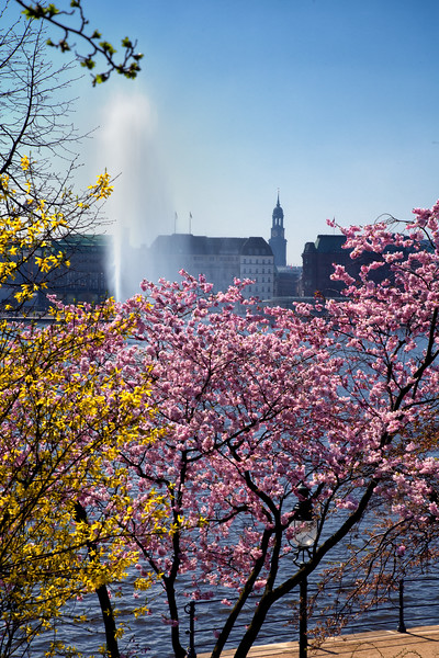 Blüte im Frühling an der Binnenalster