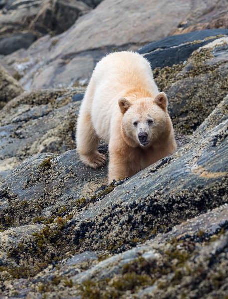 August - Great Bear Rainforest