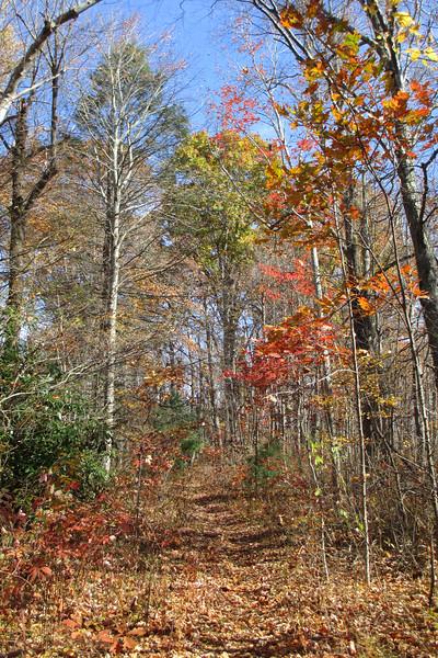 Mac's Gap Trail - 4,050'