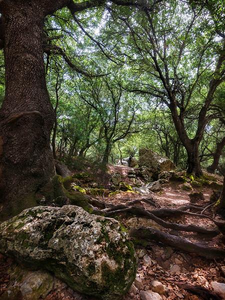 Magical forest of Salt Des Freu