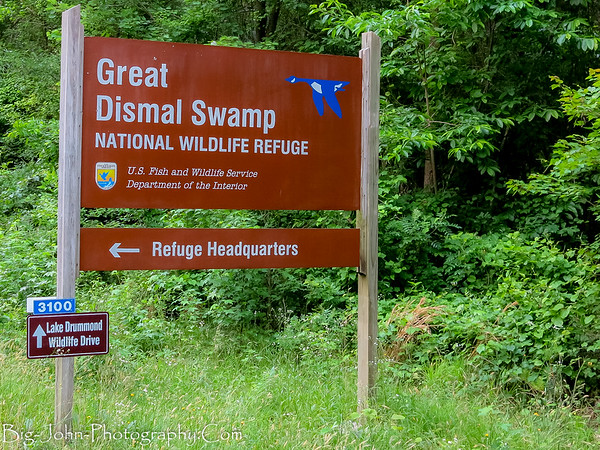 The Great Dismal Swamp Virginia 5-2017