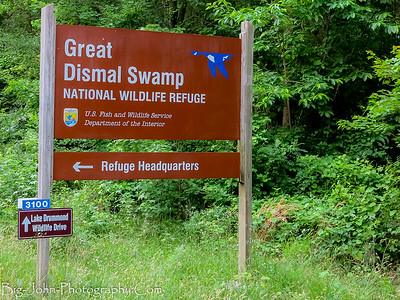 The Great Dismal Swamp Virginia 5-2017
