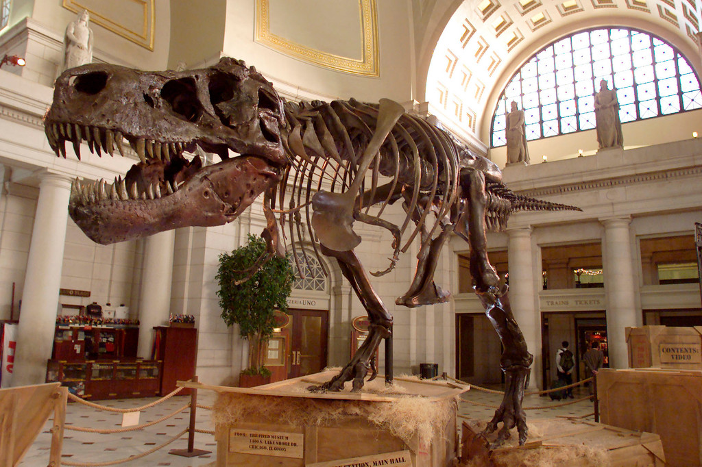 . The Tyrannosaurus Rex skeleton known as Sue stands on display at Union Station June 7, 2000 in Washington D.C. Sue, the 67 million-year-old dinosaur, is scheduled to be put on display in many cities around the world. (Photo by Mark Wilson/Newsmakers)