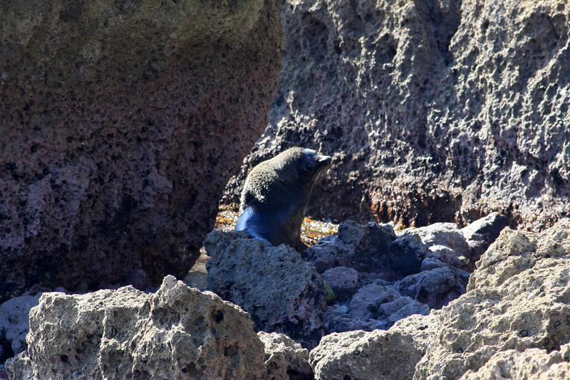 Seals 061.jpg