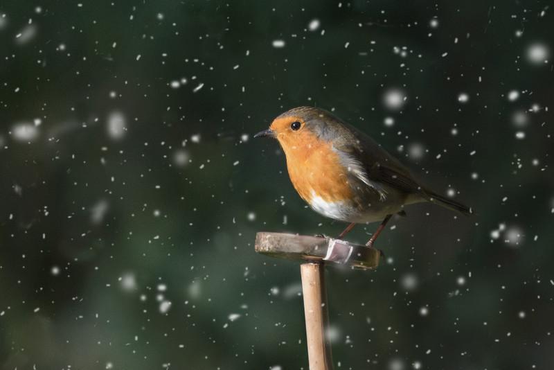 Jackie Robin in winter.jpg