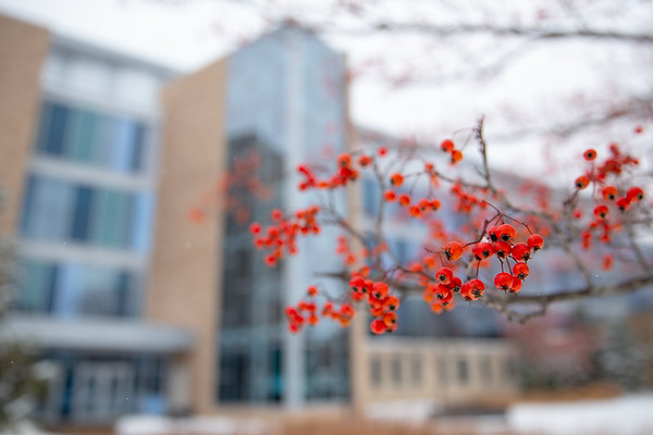 180339 Campus, Winter, Snow, red berry, Pharmacy Building, South Campus