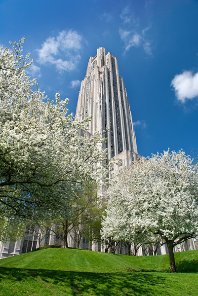 Commencement Pitt Blossoms Spring Cathedral of Learning.jpg
