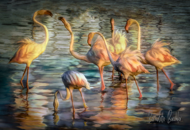Pink Flamingos _ The Camargue _Provence, France.jpg