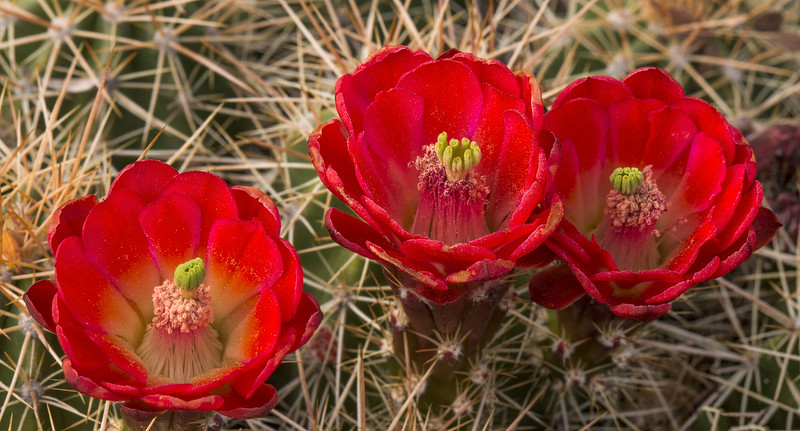 Prickly Beauty