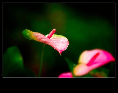 Unknown flower-12