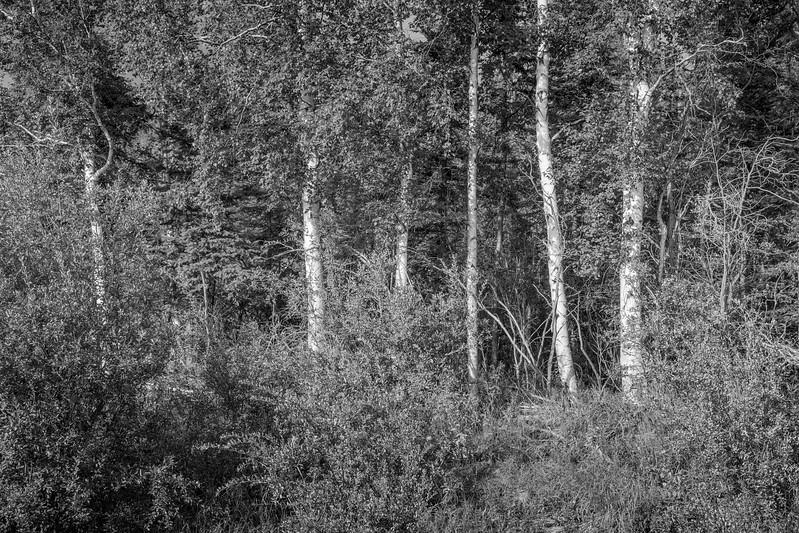 2017-08-15-Fairbanks-115.jpg