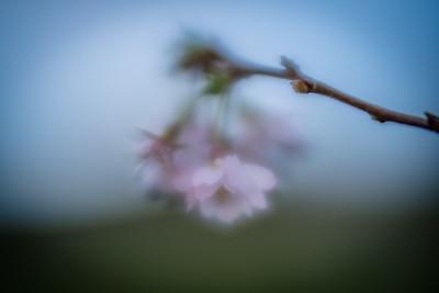 December Blossom
