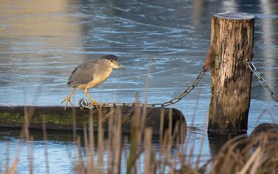 vogels oudewater en asperen