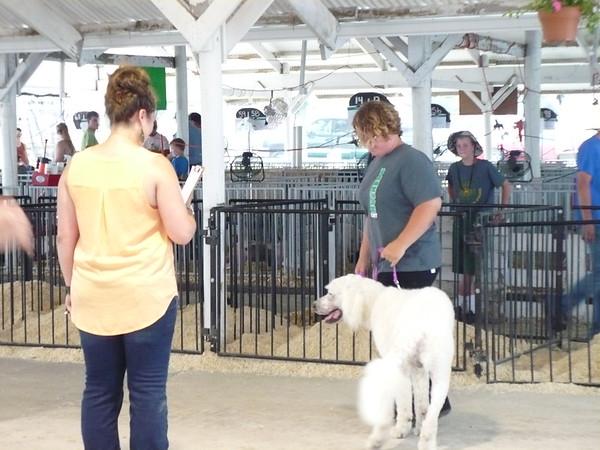 2015 Benton County Fair Dog and Pet Show