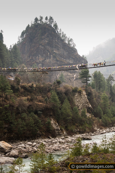 Mules head along a suspension bridge high above the Dudh Kosi.