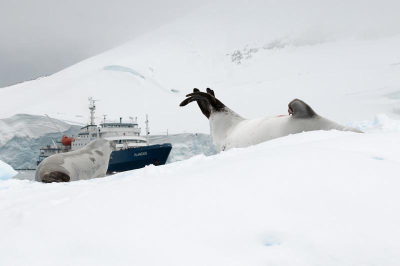 Antarctica 2015 (24 of 99).jpg