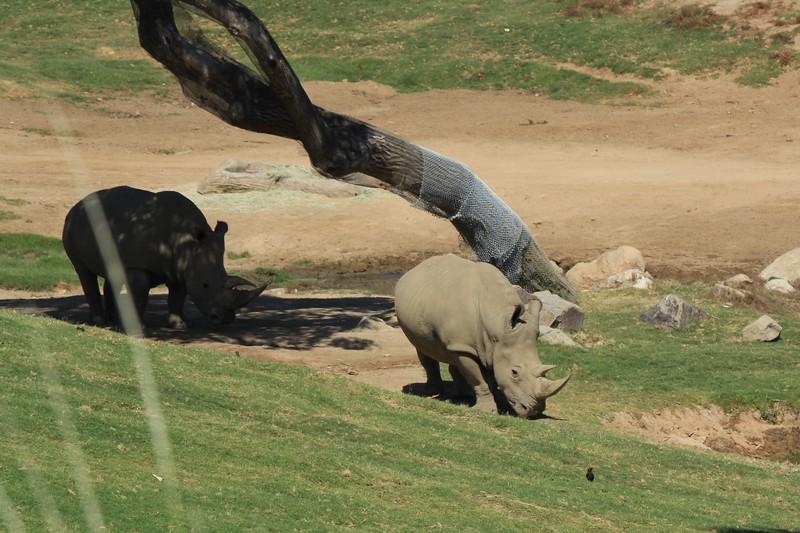 San Diego wild animal pakr 201700043.jpg