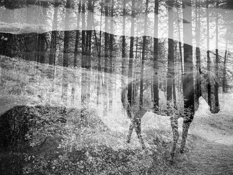 Dakota in the forest