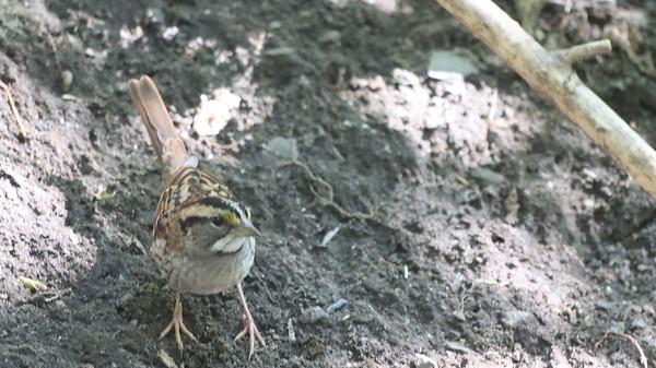 17 Sept 2021 Falaise Birds