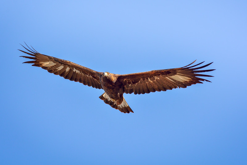 -_Golden Eagle 2014-10-26_075-Edit.jpg