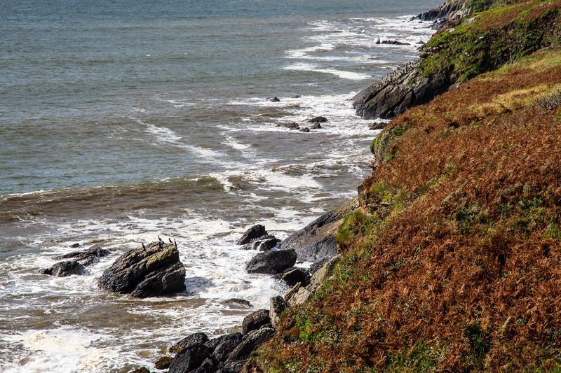 Cormorants on Dingle cliffs