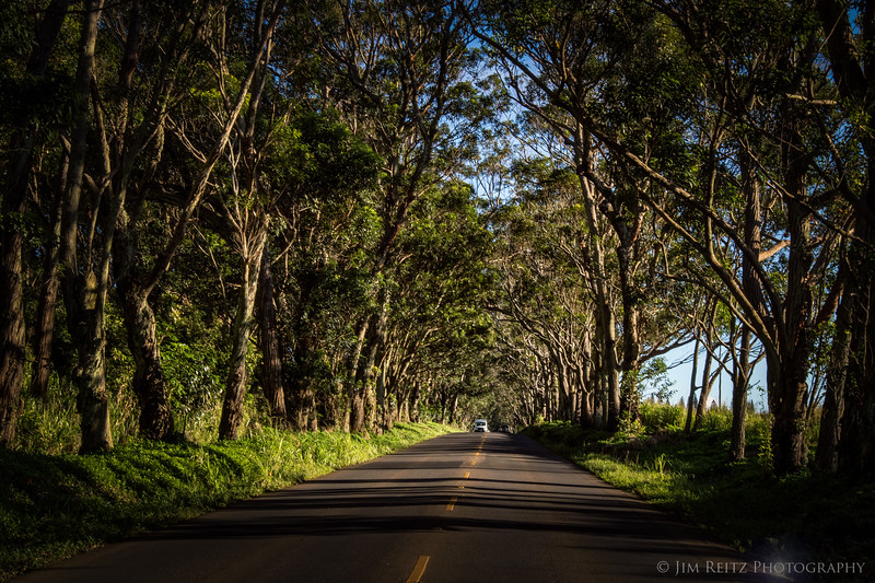 "The ""tree tunnel"" on the road to Poipu - Kauai, Hawaii..."