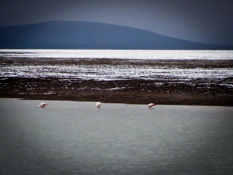 Atacama 201202 Salar de Tara (24c).jpg