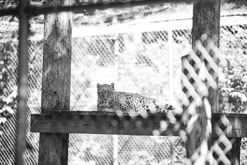 animals-105.jpg