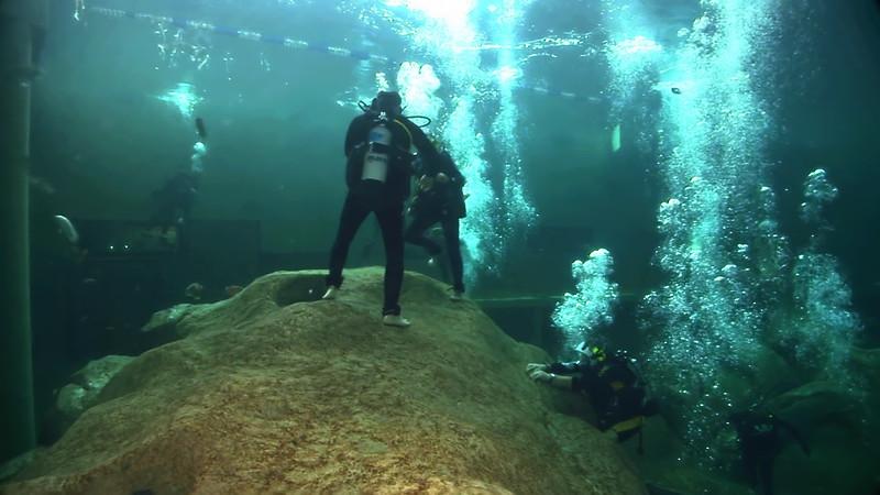 Underwater Walk Edit 45secs.00_00_34_02.Still041.jpg