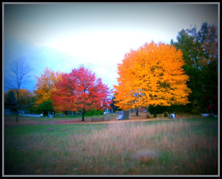 fall (15).jpg