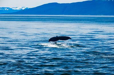 Whale Watching - Alaska 2012