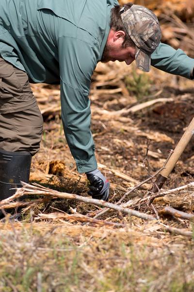 tree planting FOSZB Warren Nelson Bog Blue Spruce Road Sax-Zim Bog MN DSC07398.jpg