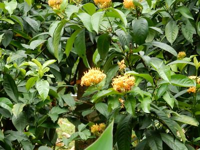 Putrajaya Botanical Gardens - Taman Botani