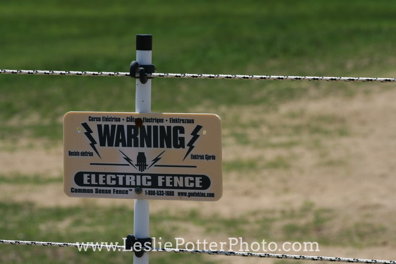 Electric Horse Fence