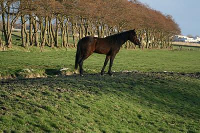 Voorjaar 2009. Foto's Milou en Jaap van Leeuwen