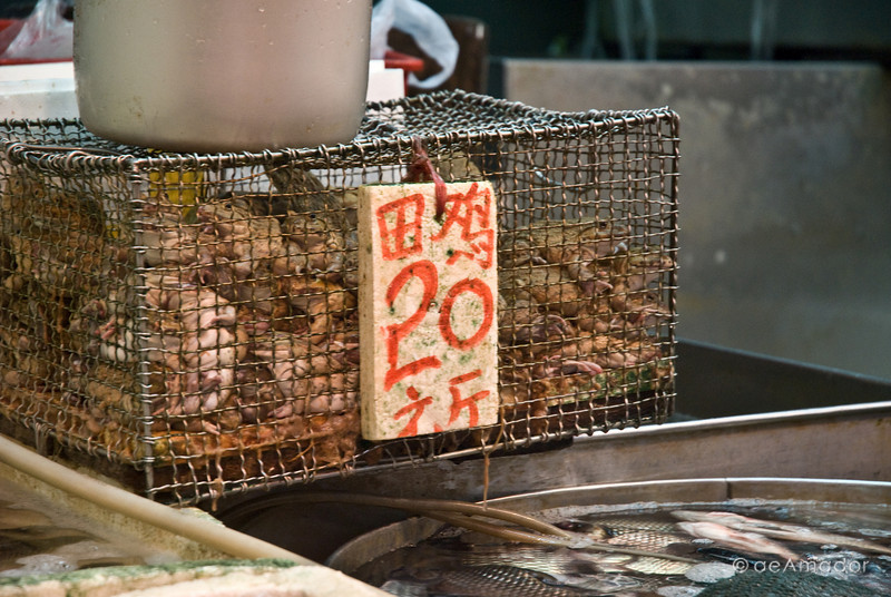 aeamador©-HK08_DSC0003     Saukiwan market. Saukiwan, Hong Kong island.  Live frogs for sale.