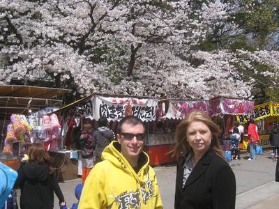 2012 Cherry Blossoms, Tsuramai Park, Nagoya Japan