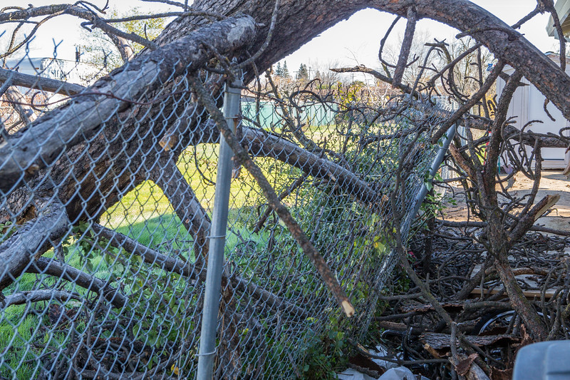5671 Wallace Ave - Tree 1030am 12 16 2017 Extremly Windy Conditions-10.jpg