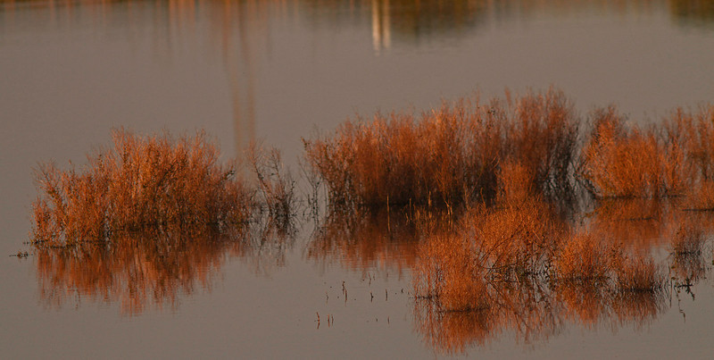 Sunset Pond Grasses #3, Las Gallinas